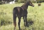 Capture cheval